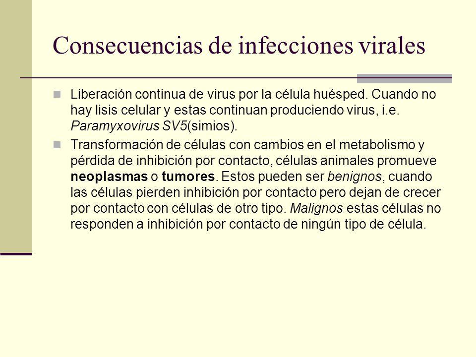 Micrografías electrónicas de virus