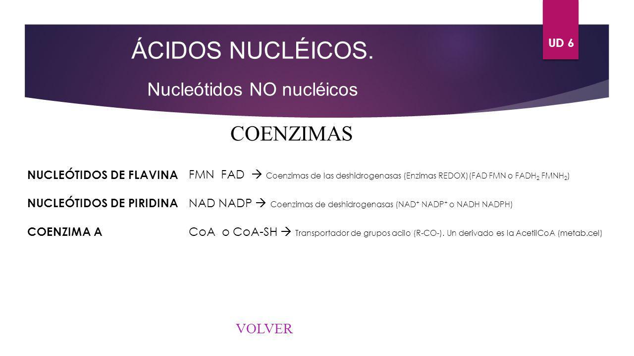 UD 6 ÁCIDOS NUCLÉICOS. Nucleótidos NO nucléicos COENZIMAS NUCLEÓTIDOS DE FLAVINA NUCLEÓTIDOS DE PIRIDINA COENZIMA A FMN FAD Coenzimas de las deshidrog