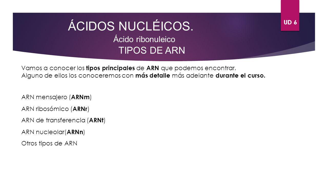 UD 6 ÁCIDOS NUCLÉICOS. Ácido ribonuleico TIPOS DE ARN Vamos a conocer los tipos principales de ARN que podemos encontrar. Alguno de ellos los conocere