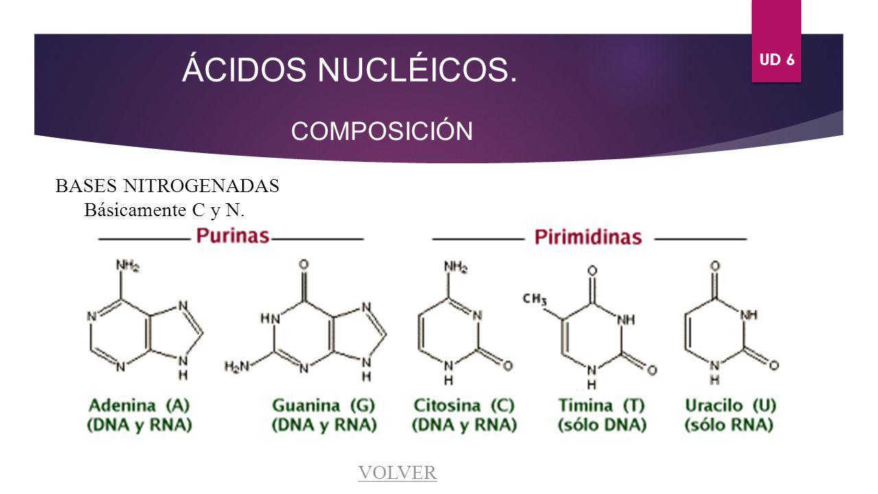 UD 6 ÁCIDOS NUCLÉICOS. COMPOSICIÓN BASES NITROGENADAS Básicamente C y N. VOLVER