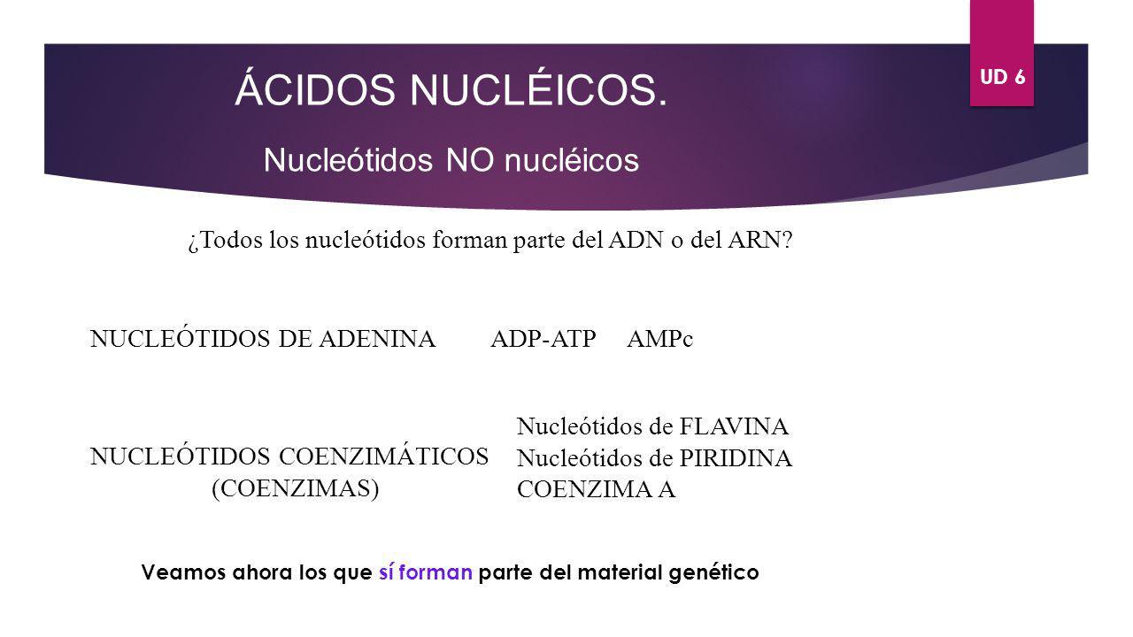 UD 6 ÁCIDOS NUCLÉICOS. Nucleótidos NO nucléicos ¿Todos los nucleótidos forman parte del ADN o del ARN? NUCLEÓTIDOS DE ADENINA NUCLEÓTIDOS COENZIMÁTICO