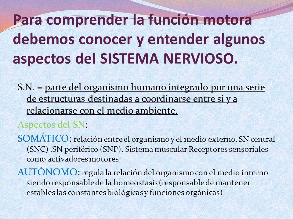 Para comprender la función motora debemos conocer y entender algunos aspectos del SISTEMA NERVIOSO. S.N. = parte del organismo humano integrado por un