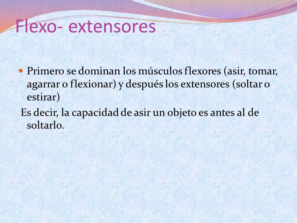Flexo- extensores Primero se dominan los músculos flexores (asir, tomar, agarrar o flexionar) y después los extensores (soltar o estirar) Es decir, la