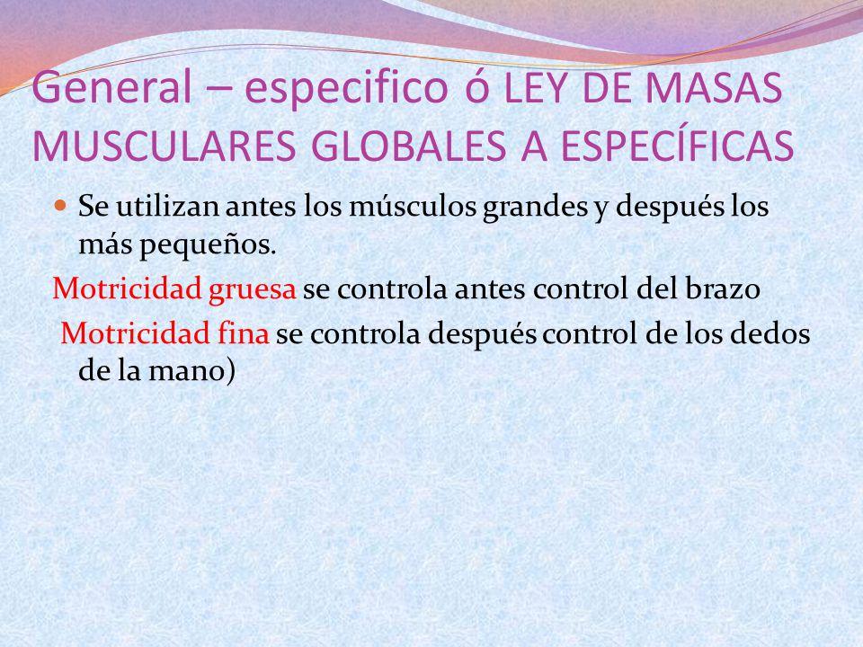 General – especifico ó LEY DE MASAS MUSCULARES GLOBALES A ESPECÍFICAS Se utilizan antes los músculos grandes y después los más pequeños. Motricidad gr