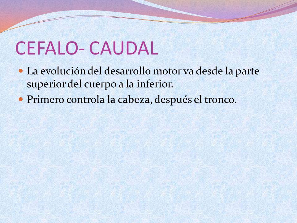 CEFALO- CAUDAL La evolución del desarrollo motor va desde la parte superior del cuerpo a la inferior. Primero controla la cabeza, después el tronco.