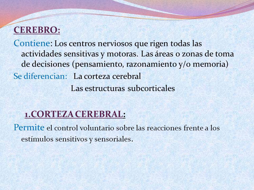 CEREBRO: Contiene: Los centros nerviosos que rigen todas las actividades sensitivas y motoras. Las áreas o zonas de toma de decisiones (pensamiento, r