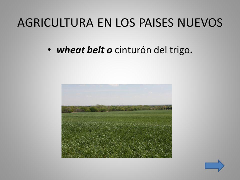 AGRICULTURA EN LOS PAISES NUEVOS wheat belt o cinturón del trigo.