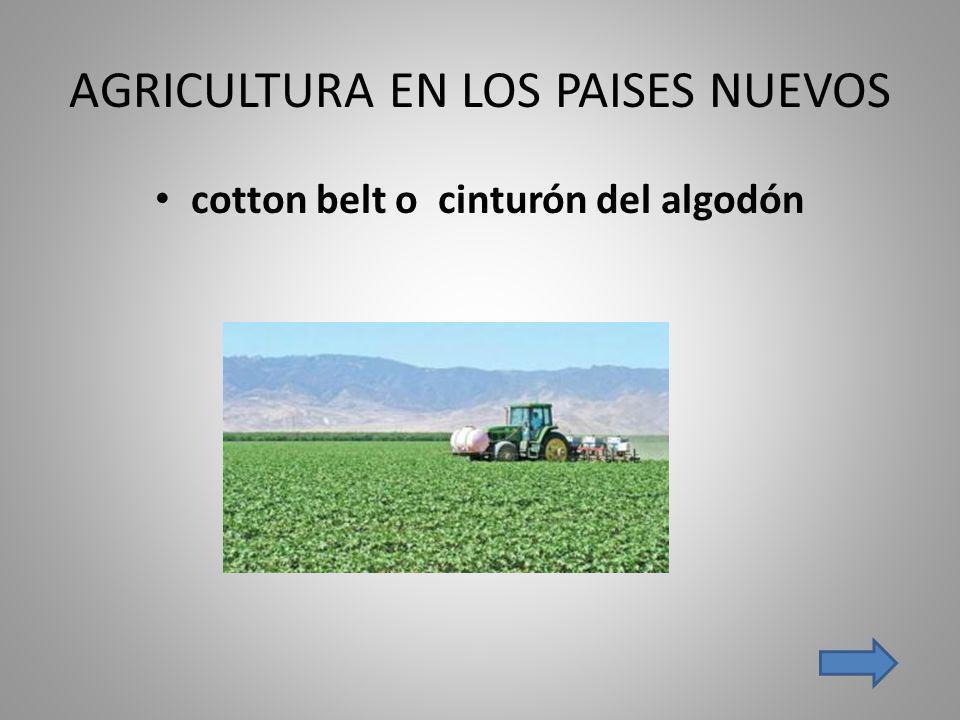 AGRICULTURA EN LOS PAISES NUEVOS cotton belt o cinturón del algodón