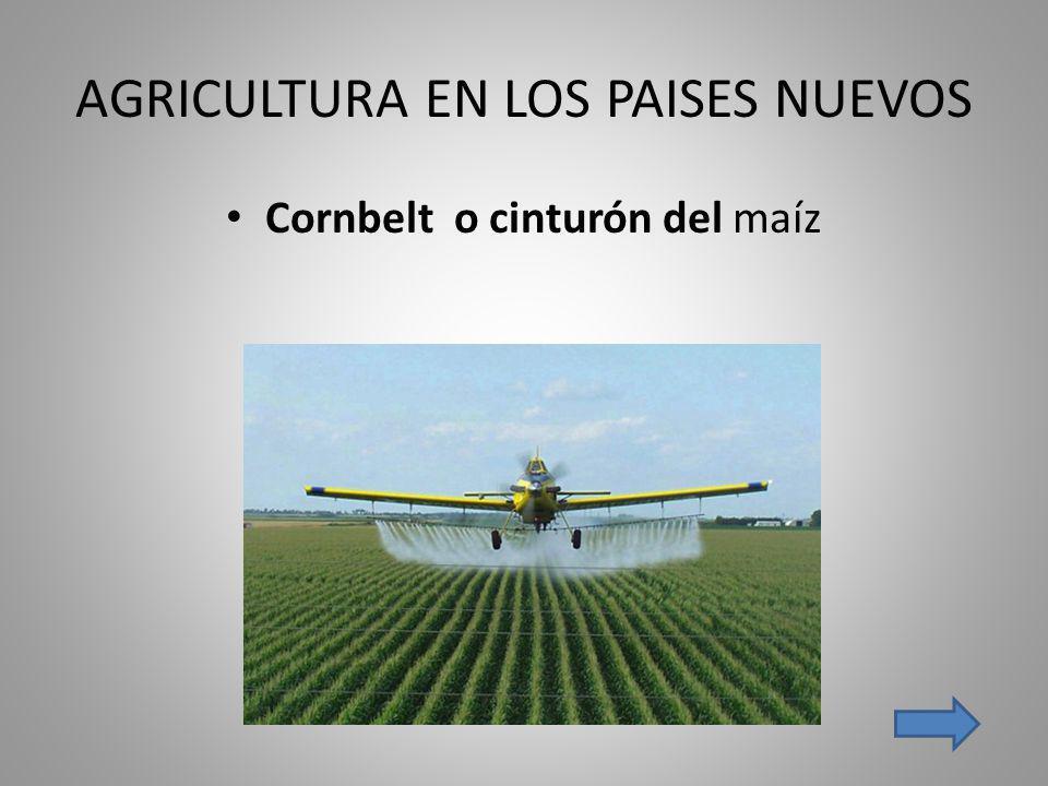 AGRICULTURA EN LOS PAISES NUEVOS Cornbelt o cinturón del maíz