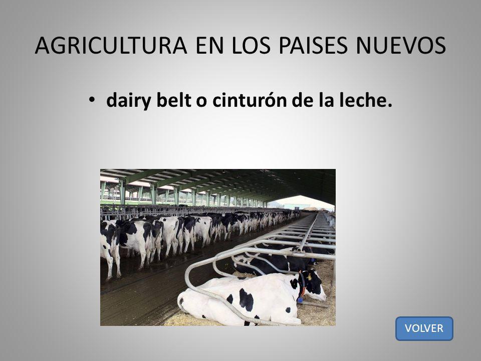 AGRICULTURA EN LOS PAISES NUEVOS dairy belt o cinturón de la leche. VOLVER