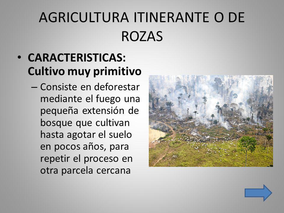 AGRICULTURA ITINERANTE O DE ROZAS CARACTERISTICAS: Cultivo muy primitivo – Consiste en deforestar mediante el fuego una pequeña extensión de bosque qu