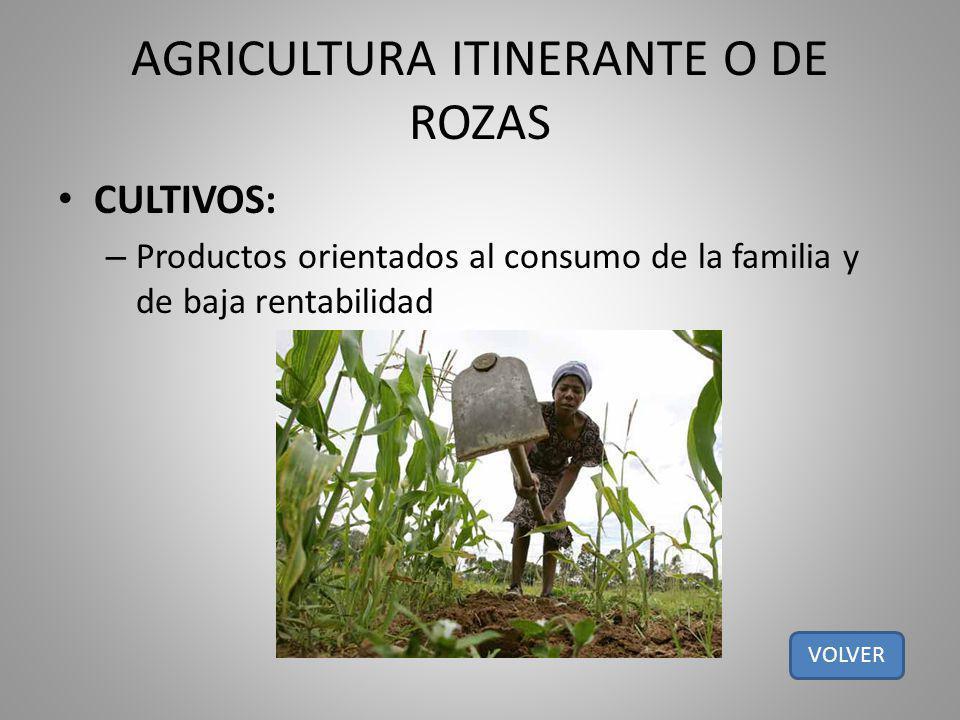 AGRICULTURA ITINERANTE O DE ROZAS CULTIVOS: – Productos orientados al consumo de la familia y de baja rentabilidad VOLVER