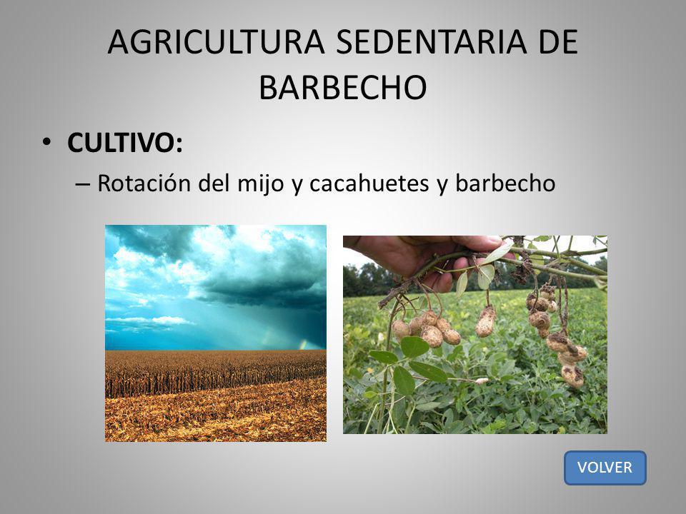 AGRICULTURA SEDENTARIA DE BARBECHO CULTIVO: – Rotación del mijo y cacahuetes y barbecho VOLVER