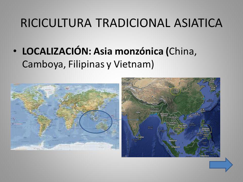 RICICULTURA TRADICIONAL ASIATICA LOCALIZACIÓN: Asia monzónica (China, Camboya, Filipinas y Vietnam)