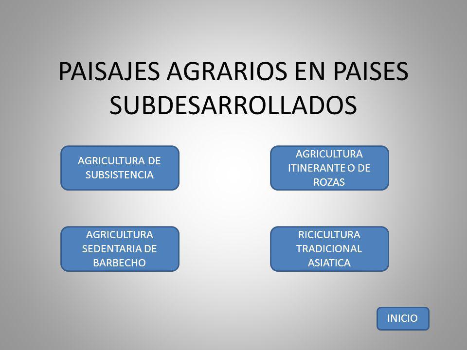 PAISAJES AGRARIOS EN PAISES SUBDESARROLLADOS AGRICULTURA DE SUBSISTENCIA AGRICULTURA ITINERANTE O DE ROZAS AGRICULTURA SEDENTARIA DE BARBECHO RICICULT