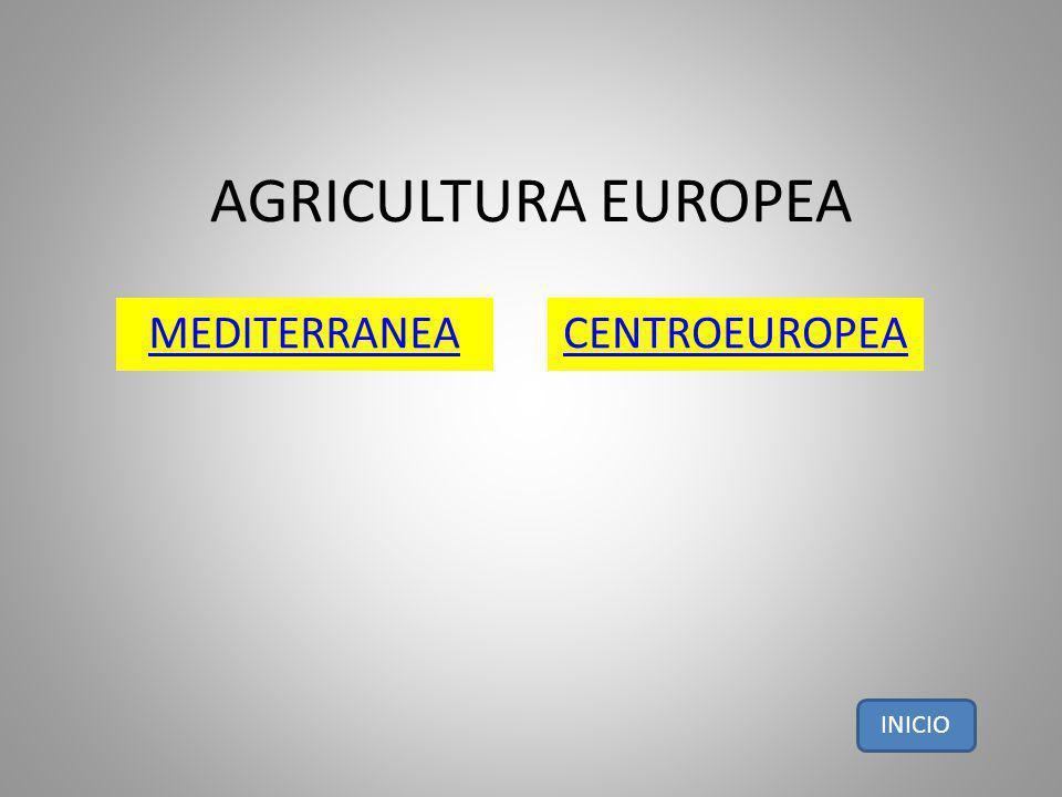 AGRICULTURA EUROPEA MEDITERRANEACENTROEUROPEA INICIO