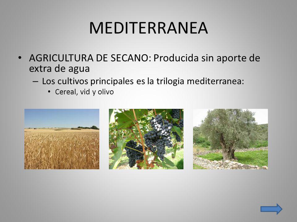 MEDITERRANEA AGRICULTURA DE SECANO: Producida sin aporte de extra de agua – Los cultivos principales es la trilogia mediterranea: Cereal, vid y olivo