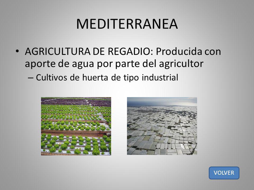 MEDITERRANEA AGRICULTURA DE REGADIO: Producida con aporte de agua por parte del agricultor – Cultivos de huerta de tipo industrial VOLVER