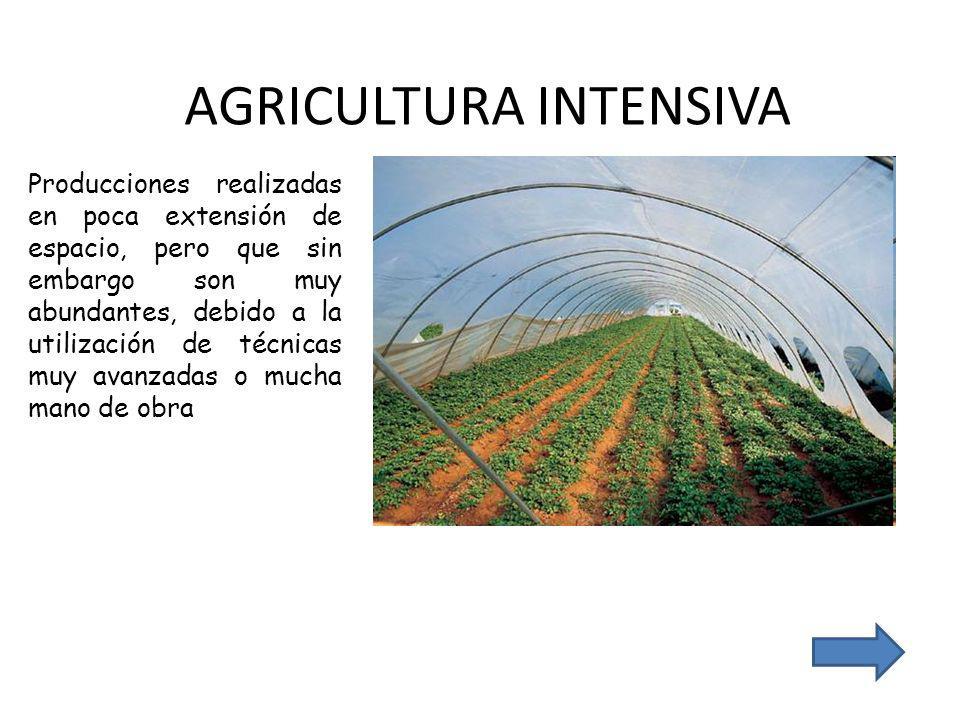 AGRICULTURA INTENSIVA Producciones realizadas en poca extensión de espacio, pero que sin embargo son muy abundantes, debido a la utilización de técnicas muy avanzadas o mucha mano de obra