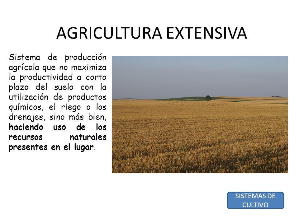 AGRICULTURA EXTENSIVA Sistema de producción agrícola que no maximiza la productividad a corto plazo del suelo con la utilización de productos químicos, el riego o los drenajes, sino más bien, haciendo uso de los recursos naturales presentes en el lugar.