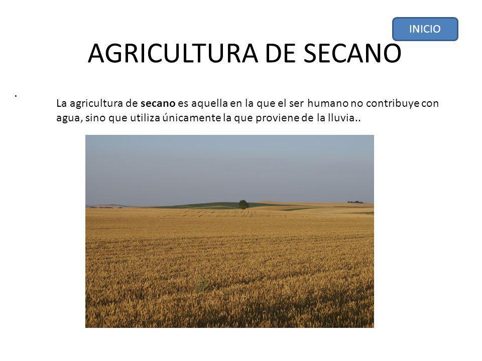 AGRICULTURA DE SECANO.