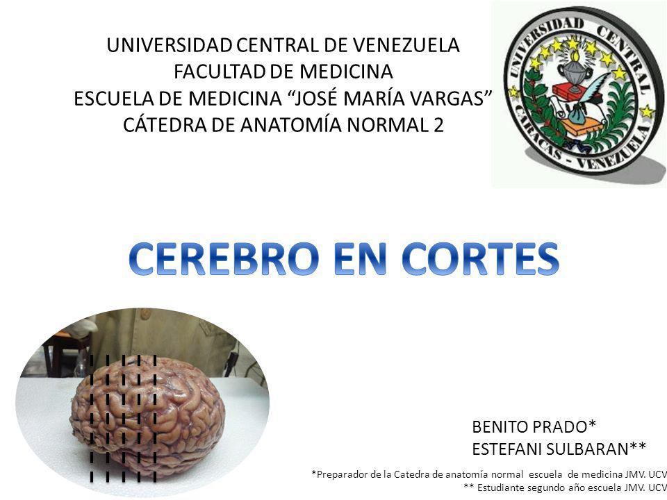 UNIVERSIDAD CENTRAL DE VENEZUELA FACULTAD DE MEDICINA ESCUELA DE MEDICINA JOSÉ MARÍA VARGAS CÁTEDRA DE ANATOMÍA NORMAL 2 BENITO PRADO* ESTEFANI SULBARAN** *Preparador de la Catedra de anatomía normal escuela de medicina JMV.