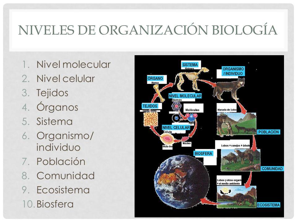 NIVELES DE ORGANIZACIÓN BIOLOGÍA 1.Nivel molecular 2.Nivel celular 3.Tejidos 4.Órganos 5.Sistema 6.Organismo/ individuo 7.Población 8.Comunidad 9.Ecos