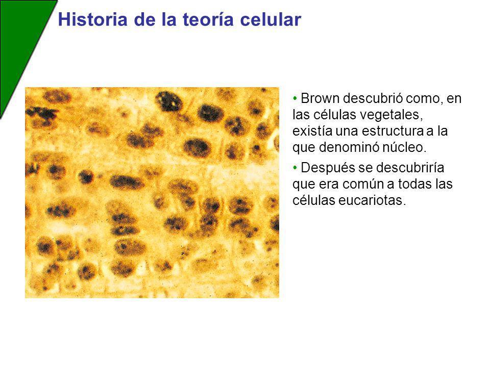 Brown descubrió como, en las células vegetales, existía una estructura a la que denominó núcleo. Después se descubriría que era común a todas las célu