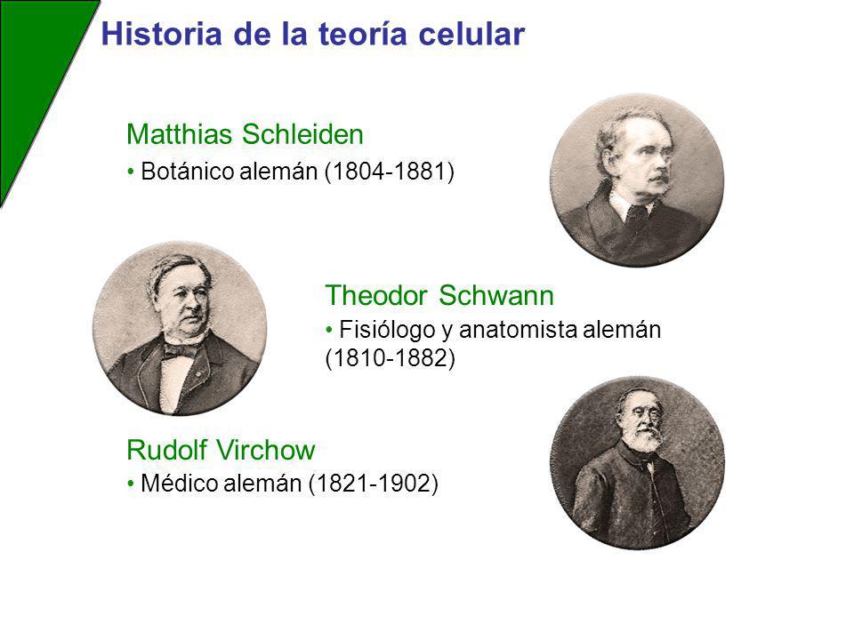 Matthias Schleiden Theodor Schwann Rudolf Virchow Fisiólogo y anatomista alemán (1810-1882) Médico alemán (1821-1902) Botánico alemán (1804-1881) Hist