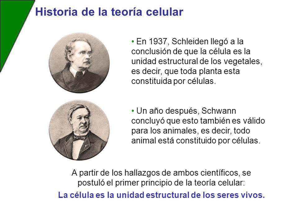 En 1937, Schleiden llegó a la conclusión de que la célula es la unidad estructural de los vegetales, es decir, que toda planta esta constituida por cé