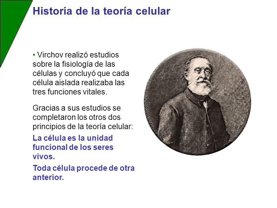 Virchov realizó estudios sobre la fisiología de las células y concluyó que cada célula aislada realizaba las tres funciones vitales. Historia de la te