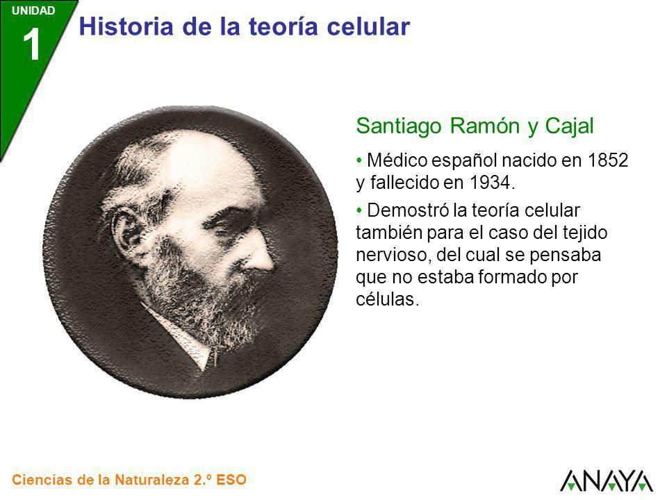 UNIDAD 1 Ciencias de la Naturaleza 2.º ESO Médico español nacido en 1852 y fallecido en 1934. Demostró la teoría celular también para el caso del teji