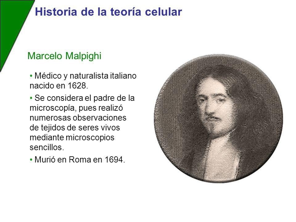 Médico y naturalista italiano nacido en 1628. Se considera el padre de la microscopía, pues realizó numerosas observaciones de tejidos de seres vivos