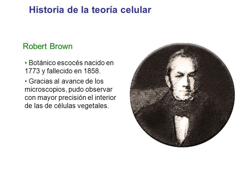Robert Brown Botánico escocés nacido en 1773 y fallecido en 1858. Gracias al avance de los microscopios, pudo observar con mayor precisión el interior