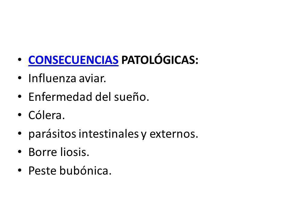 CONSECUENCIAS PATOLÓGICAS: CONSECUENCIAS Influenza aviar. Enfermedad del sueño. Cólera. parásitos intestinales y externos. Borre liosis. Peste bubónic