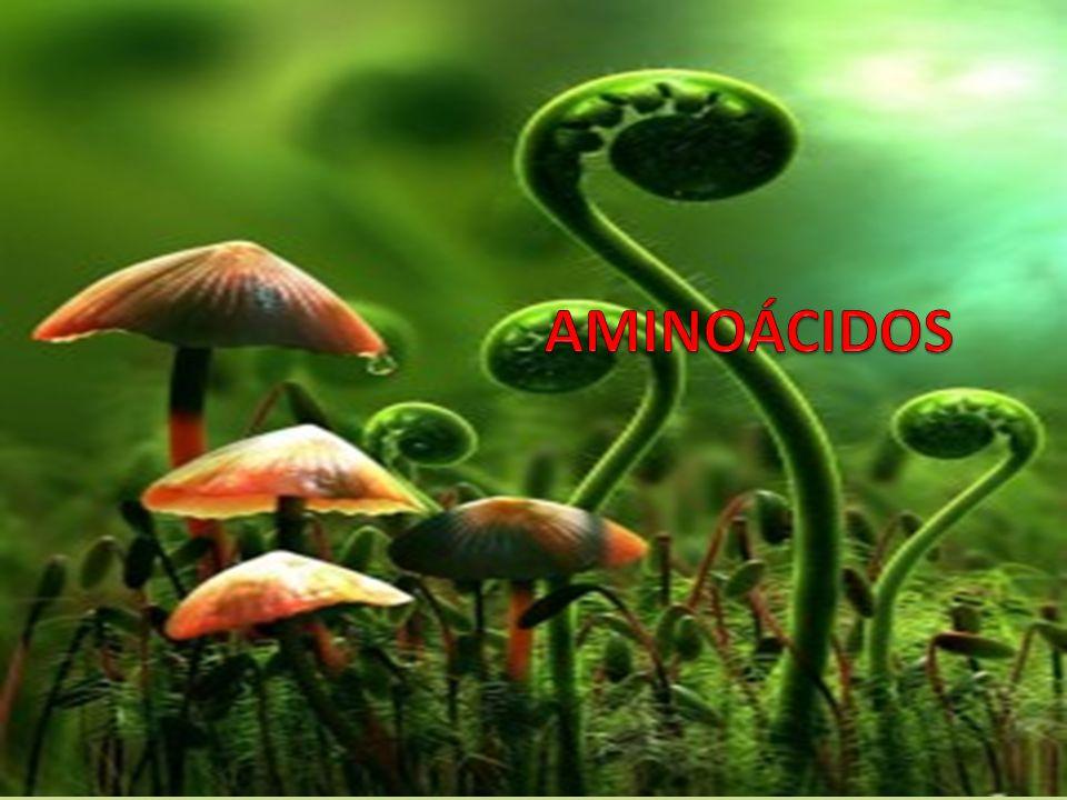 AMINOÁCIDOS Definición, estructura y propiedades de los aminoácidos Aminoácidos esenciales.