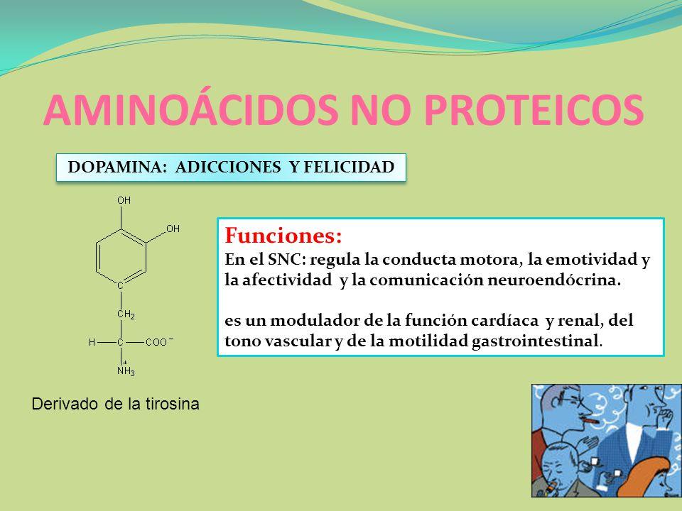 AMINOÁCIDOS NO PROTEICOS Derivado de la tirosina DOPAMINA: ADICCIONES Y FELICIDAD Funciones: En el SNC: regula la conducta motora, la emotividad y la