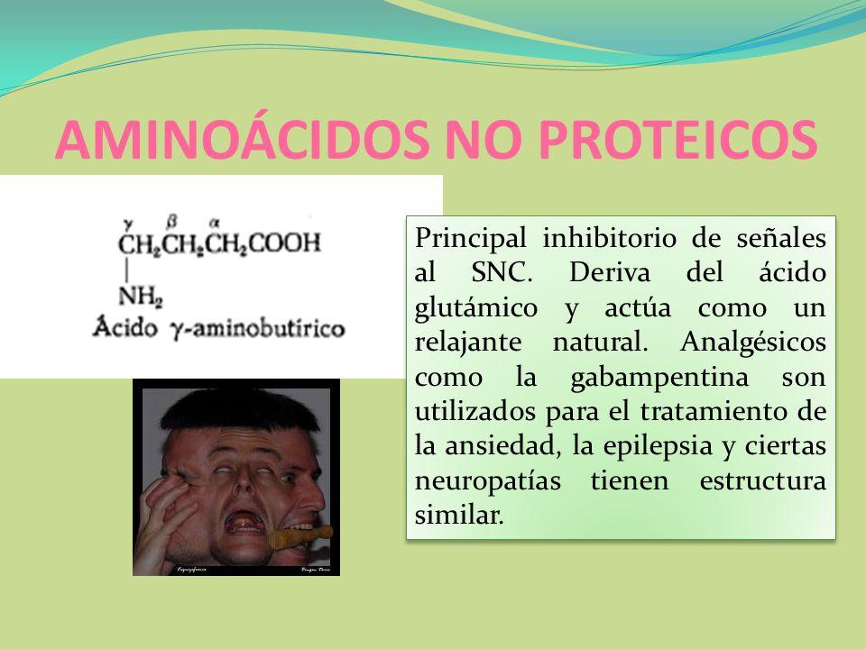 AMINOÁCIDOS NO PROTEICOS Principal inhibitorio de señales al SNC. Deriva del ácido glutámico y actúa como un relajante natural. Analgésicos como la ga