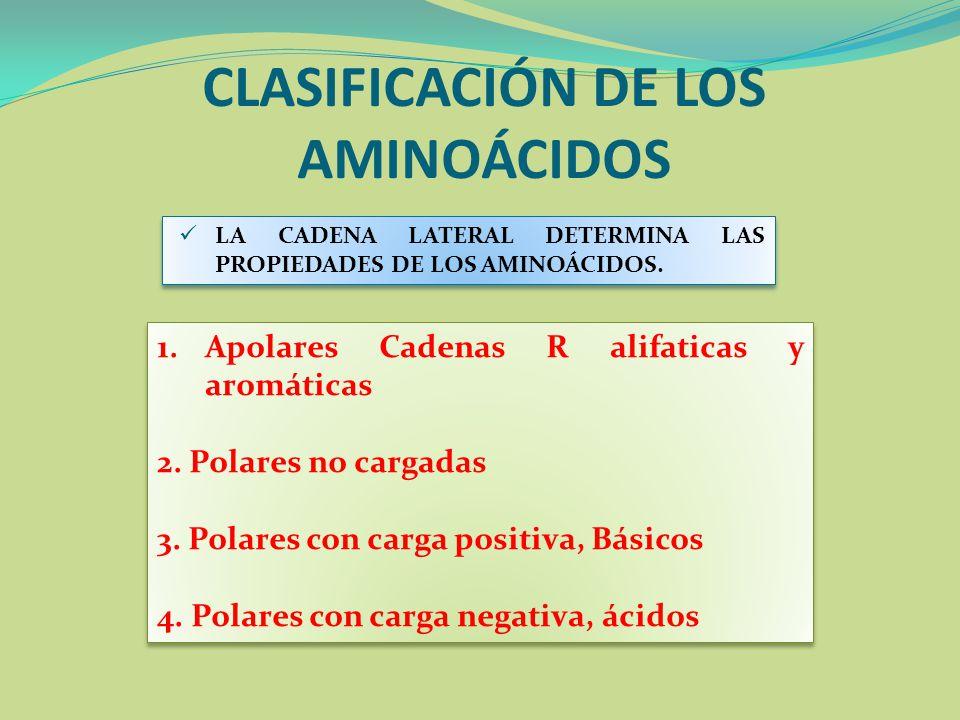 CLASIFICACIÓN DE LOS AMINOÁCIDOS 1.Apolares Cadenas R alifaticas y aromáticas 2. Polares no cargadas 3. Polares con carga positiva, Básicos 4. Polares