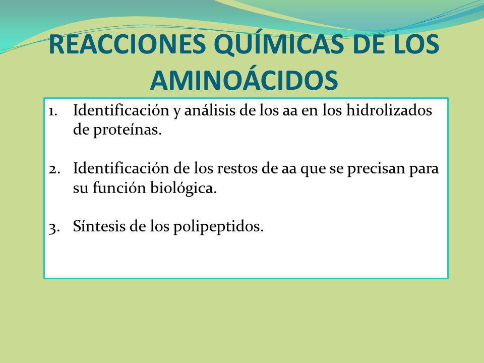 REACCIONES QUÍMICAS DE LOS AMINOÁCIDOS 1.Identificación y análisis de los aa en los hidrolizados de proteínas. 2.Identificación de los restos de aa qu