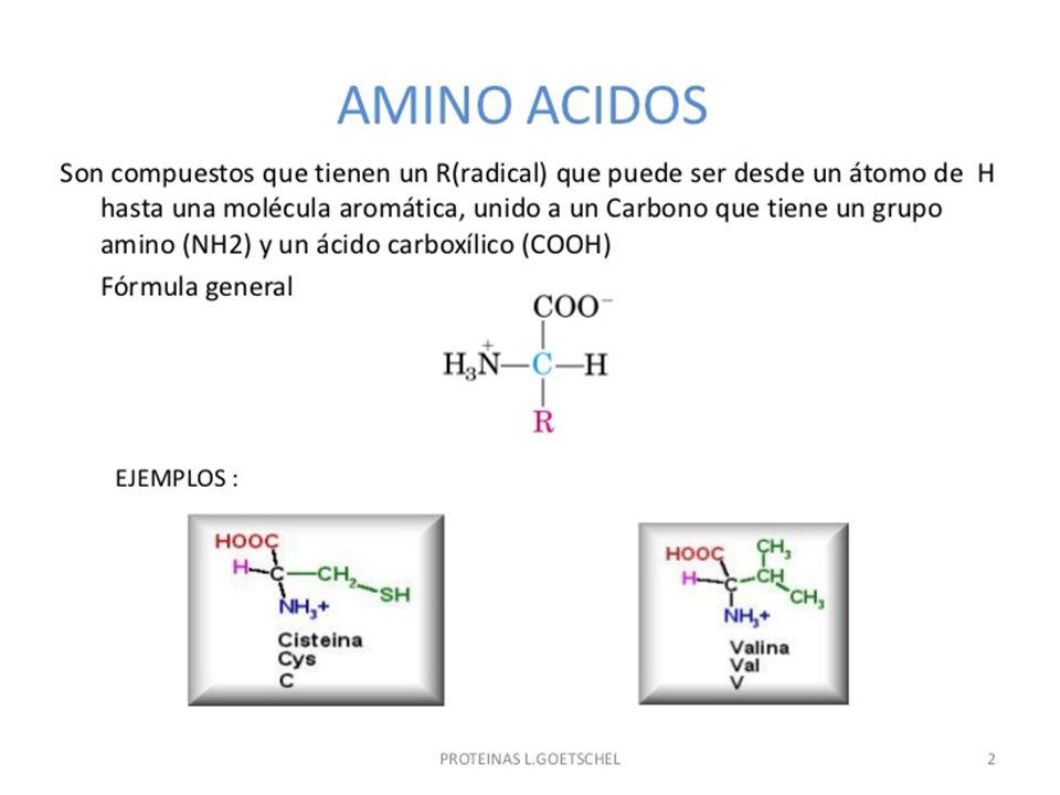 ESTRUCTURA BÁSICA DE LOS α-AMINOÁCIDO GRUPO AMINO GRUPO CARBOXILO CADENA LATERAL ATOMO DE HIDROGENO