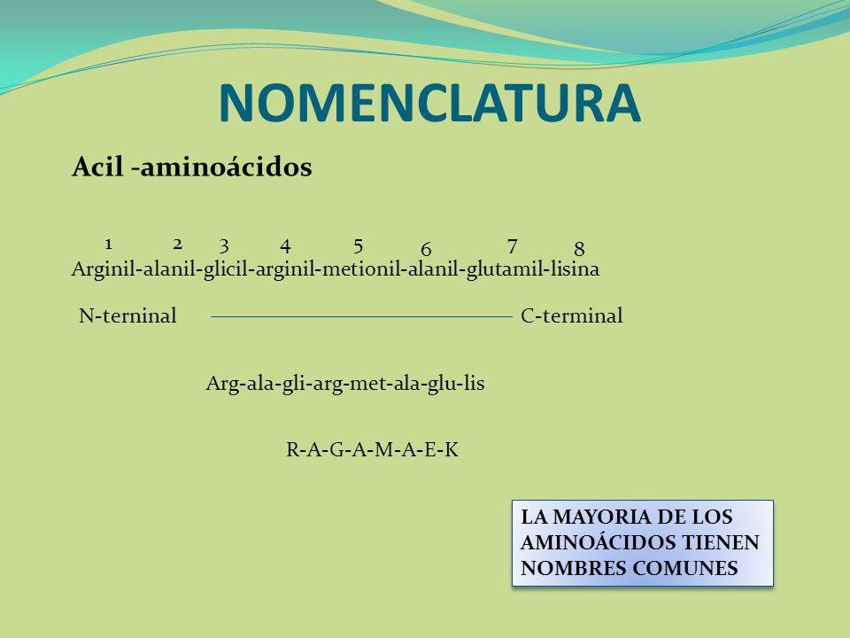 NOMENCLATURA Acil -aminoácidos LA MAYORIA DE LOS AMINOÁCIDOS TIENEN NOMBRES COMUNES Arginil-alanil-glicil-arginil-metionil-alanil-glutamil-lisina 1234