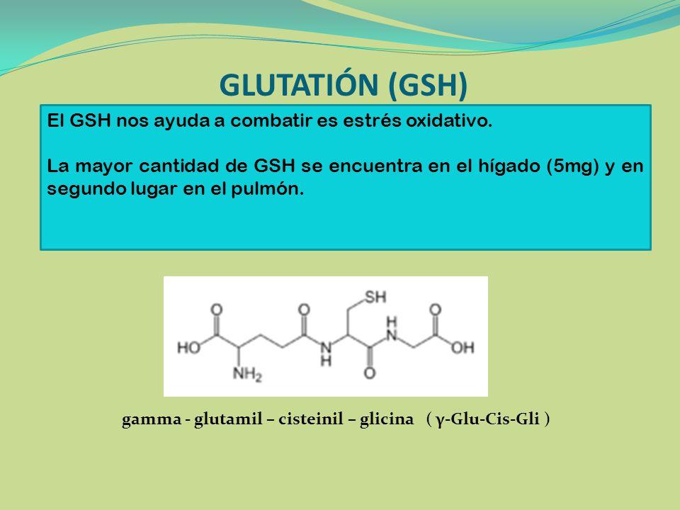GLUTATIÓN (GSH) gamma - glutamil – cisteinil – glicina ( γ-Glu-Cis-Gli ) El GSH nos ayuda a combatir es estrés oxidativo. La mayor cantidad de GSH se