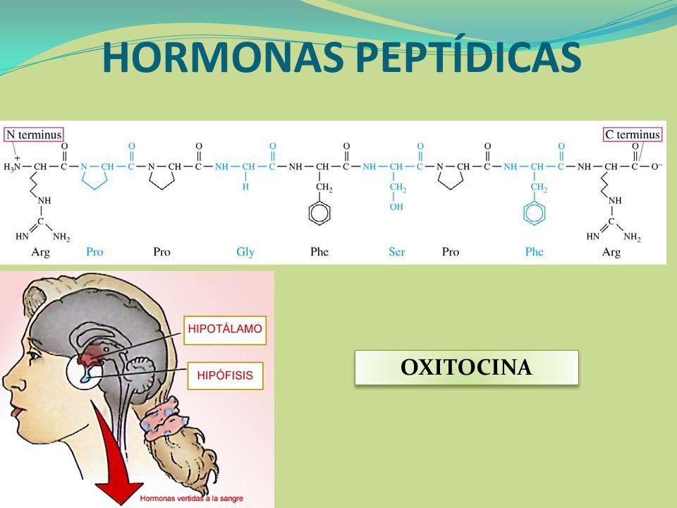 HORMONAS PEPTÍDICAS OXITOCINA