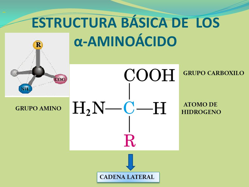 Propiedades Son anfóteros (tiene grupo amino y otro carboxílico) La mayoría presenta un punto de fusión cercano a 300 ºC Los derivados no iónicos a 100ºC Son compuestos iónicos, por lo tanto son más solubles en solventes polares.