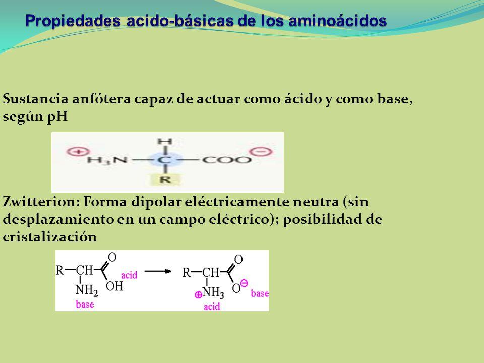 Sustancia anfótera capaz de actuar como ácido y como base, según pH Zwitterion: Forma dipolar eléctricamente neutra (sin desplazamiento en un campo el