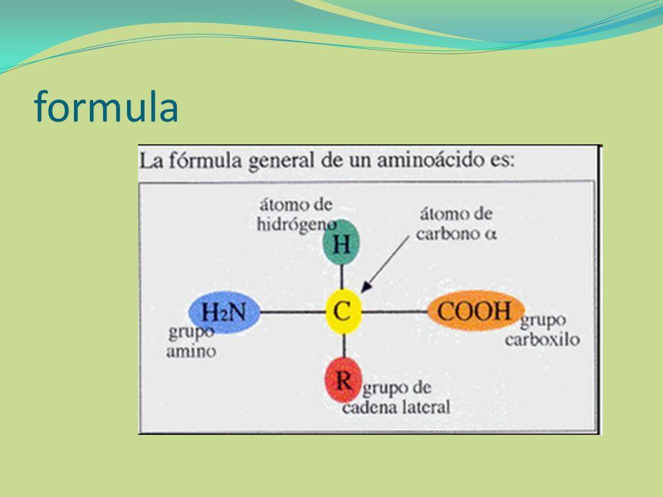 AMINOÁCIDOS NO PROTEICOS En la célula existen 150 derivados de los α -aminoácidos que no forma parte de las proteínas.