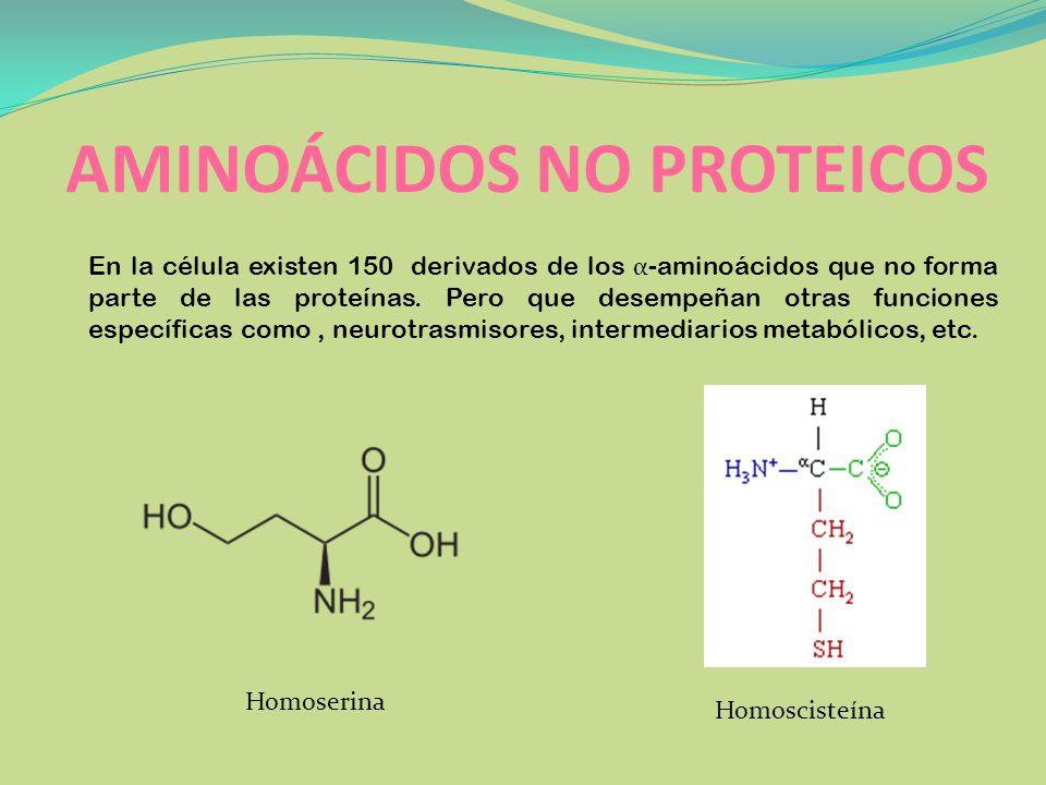 AMINOÁCIDOS NO PROTEICOS En la célula existen 150 derivados de los α -aminoácidos que no forma parte de las proteínas. Pero que desempeñan otras funci