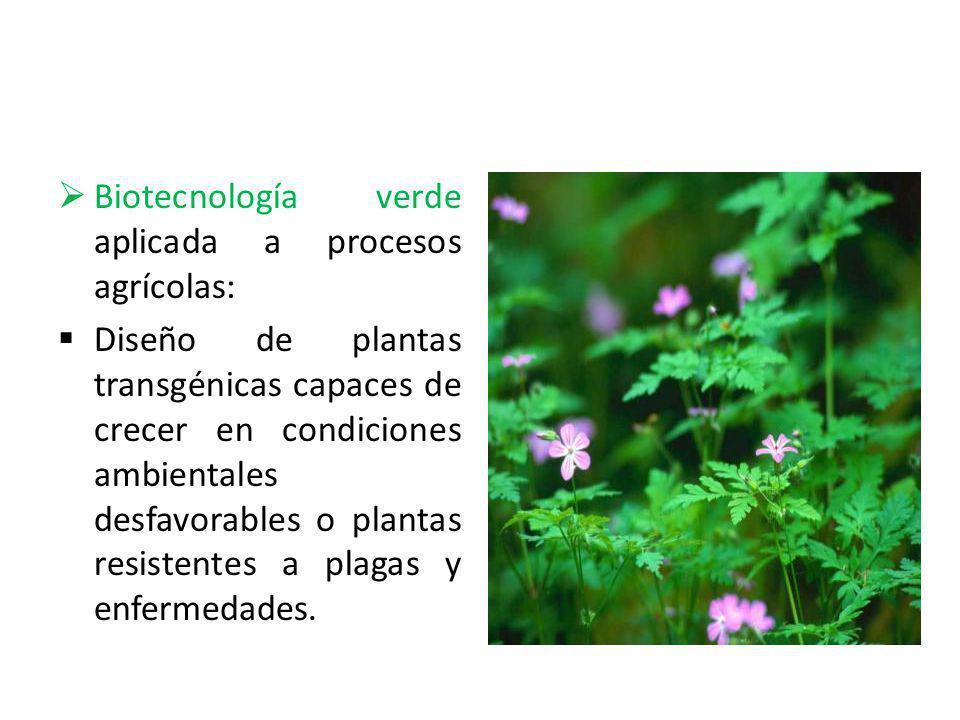 Biotecnología verde aplicada a procesos agrícolas: Diseño de plantas transgénicas capaces de crecer en condiciones ambientales desfavorables o plantas