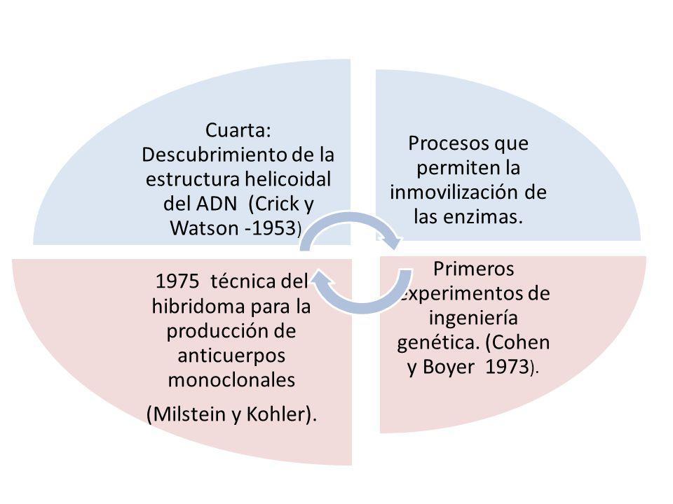 Cuarta: Descubrimiento de la estructura helicoidal del ADN (Crick y Watson -1953 ). Procesos que permiten la inmovilización de las enzimas. Primeros e